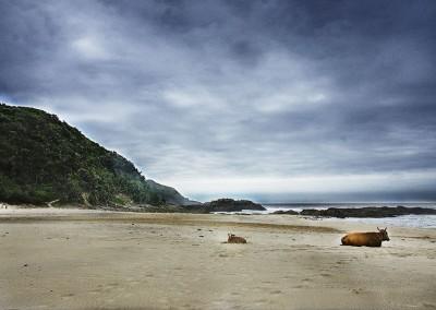 Wild Coast (Sudáfrica)