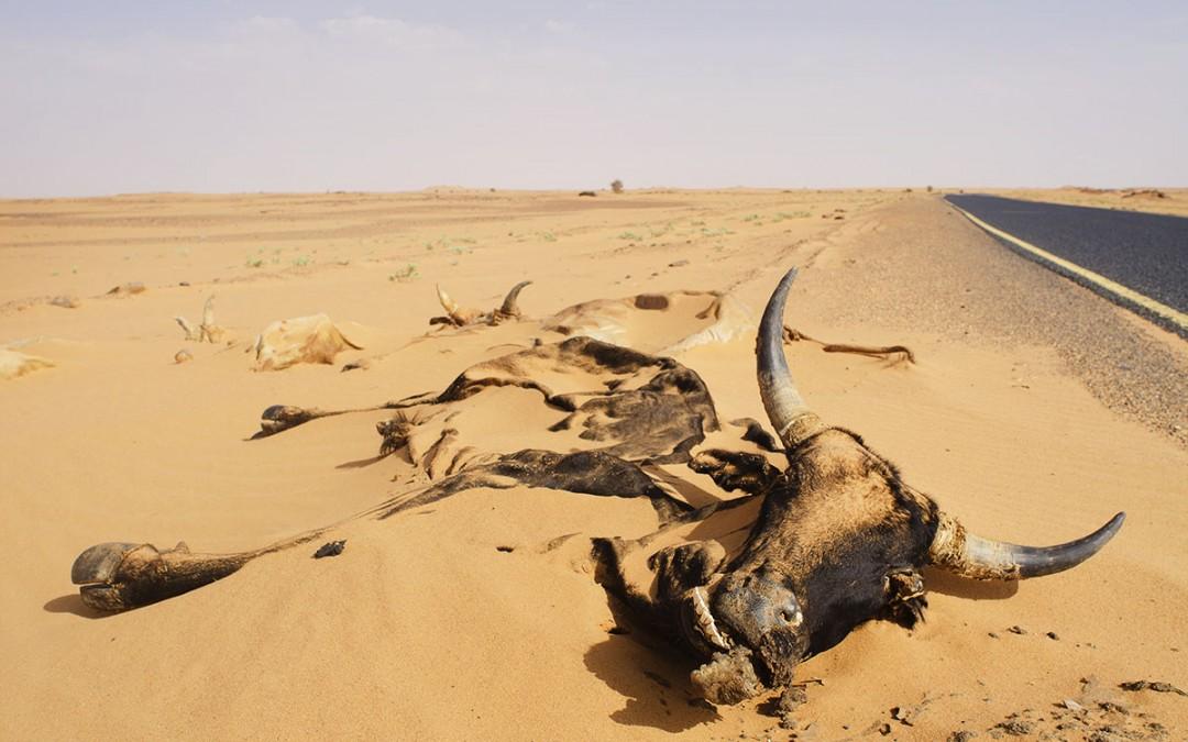 Maldito desierto