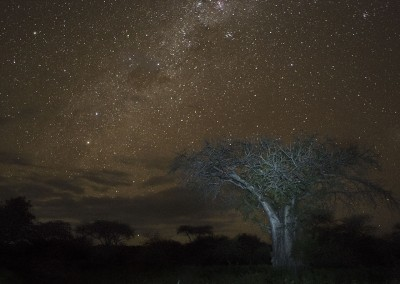 Baobab en Tanzania