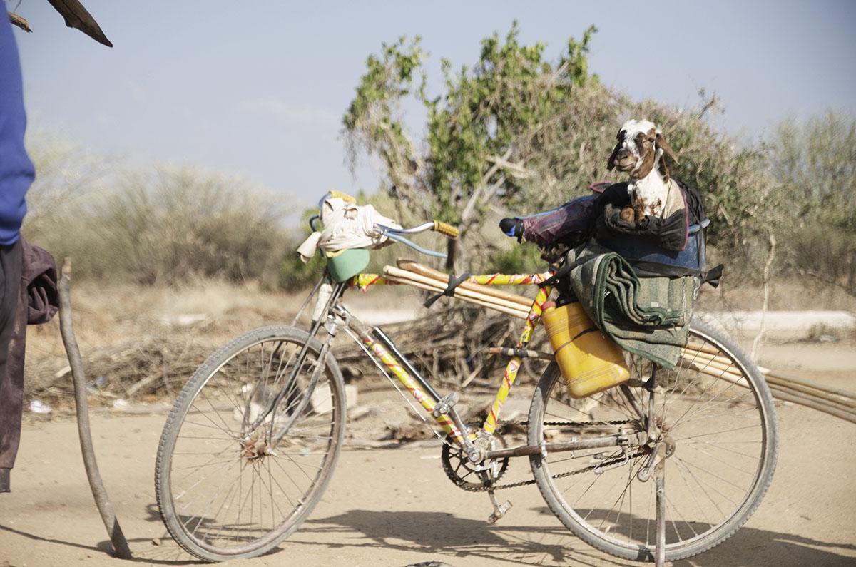 Cabra sobre la bicicleta en Tanzania