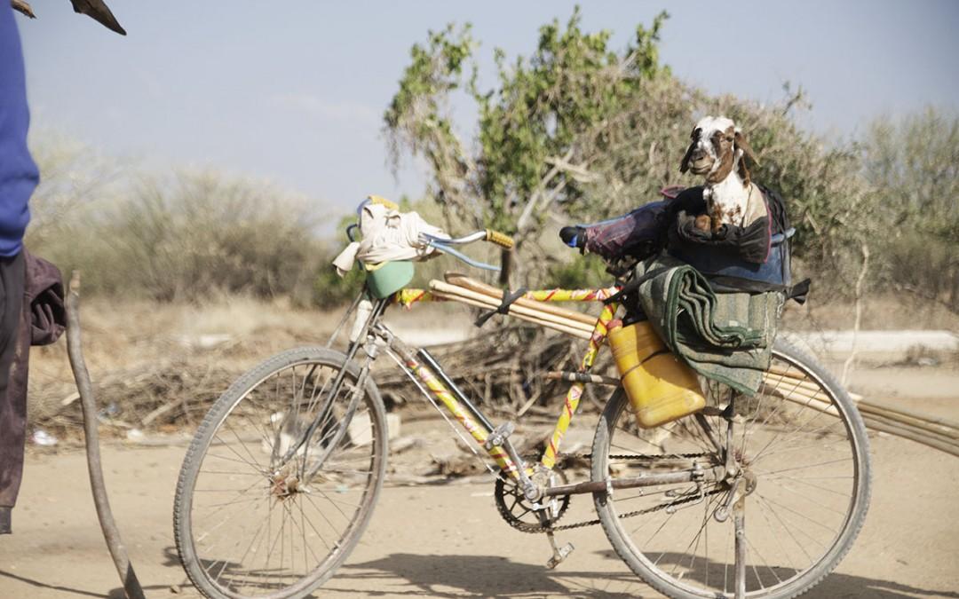 Animales y transportes