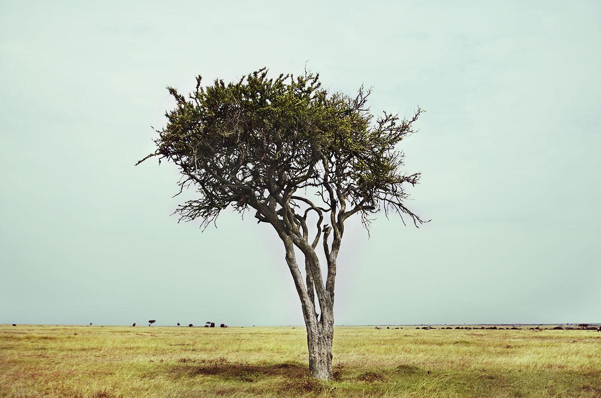 Árbol en el Maasai Mara