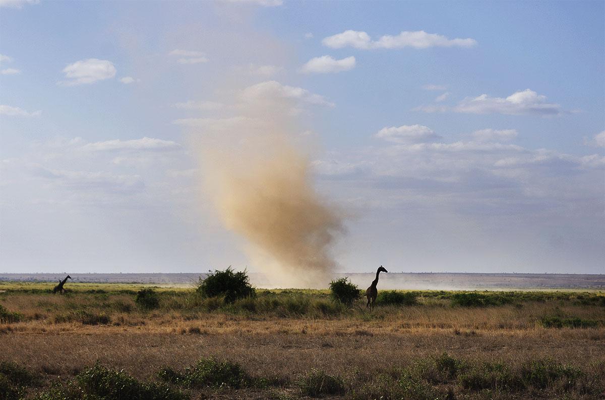 Jirafa y remolino en Amboseli