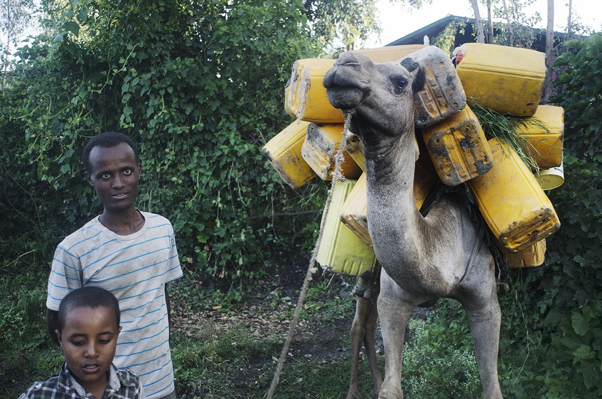 Camello cargando bidones de agua (Etiopía)